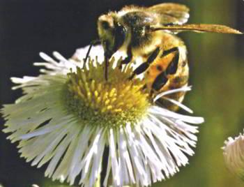 мед Life Mel эффективен против осложнений химиотерапии