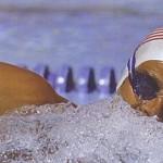 Плавание польза, стили плавания и расход калорий